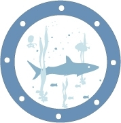 Sticker hublot Requin
